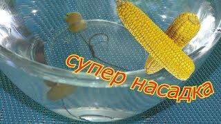 """Уловистая насадка - """"плавающая кукуруза"""".  Как сделать?  My fishing."""