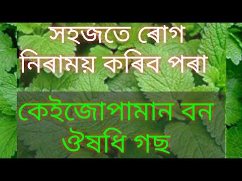 Medicine Plants || Natural Herbal Treatment || বেমাৰৰ পৰা বাচি থাকিব পৰা বন ঔষধি গছ । #Herbalmedicine