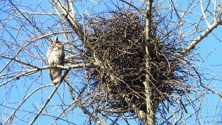 Жизнь птиц ранней весной в яблоневом саду - Птицы России - Фильм 26