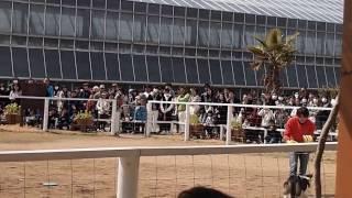「神戸どうぶつ王国」「バードパフォーマンスショー」にて.