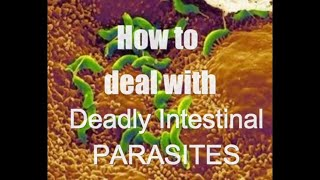 Deadly parasites - How to deal - part 2 - Intestinal Health