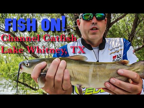 SUMMERTIME CHANNEL CATFISH! Let's Fish #20-2020 SouthWEST Lake Whitney, Texas
