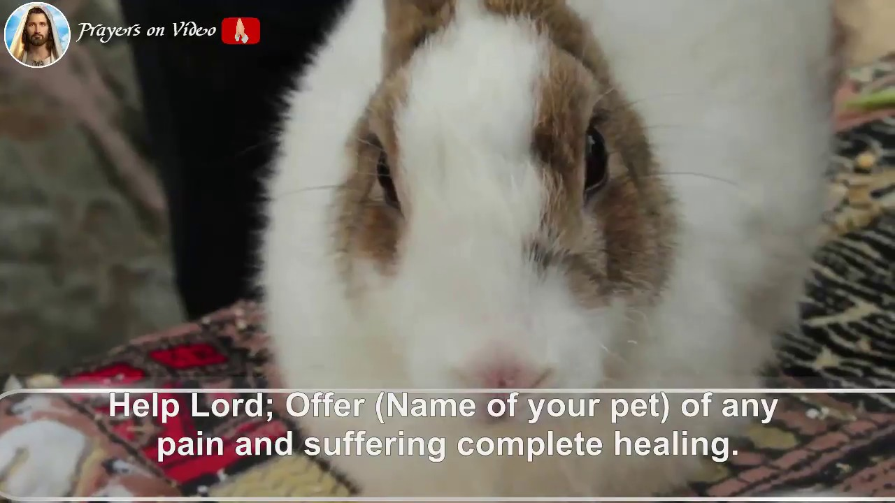 † Prayer For The Healing Of Your Sick Pet🌟 | (❤DISCOVER WHAT HAPPENS)