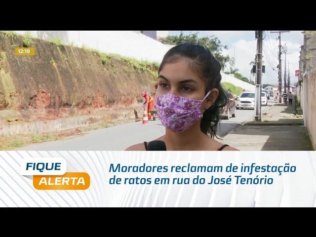 Moradores reclamam de infestação de ratos em rua do José Tenório