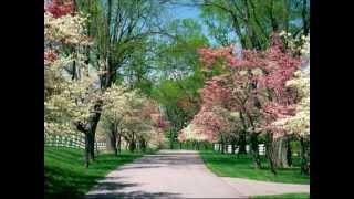 Bunga Sakura by Nora
