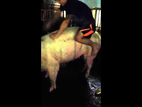Chơi lợn dã man