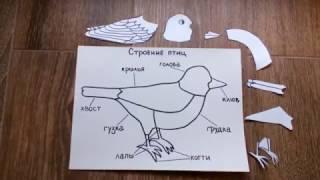 Строение птицы. Трехступенчатый урок. Монтессори