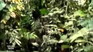 Instinto Animal - El Okapi