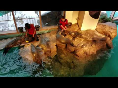 Playtime with the seals at Norwalk Maritime Aquarium - December 17, 2016