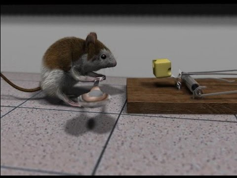 "Blender 3D short animation ""Cheese"""