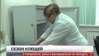 Нашествие клещей в Хабаровском крае. Новости. Gubernia TV