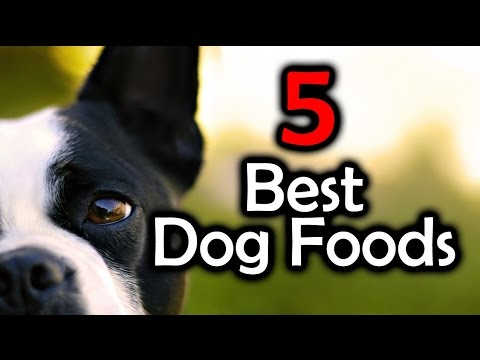 Top 5 Best Dog Foods - Keep Your Dog Healthy!