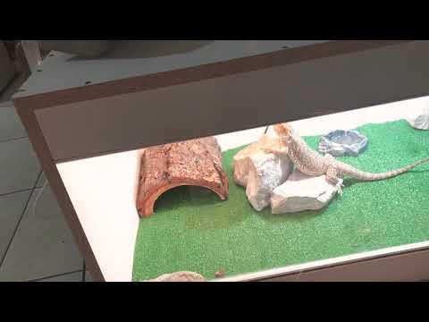 DIY Melamine enclosure for bearded dragon