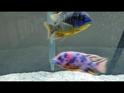 CiCHLIDS FLASHING AND TWITCHING ! !