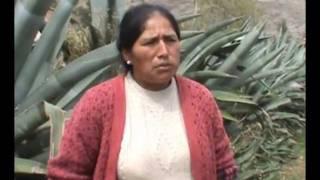 Heifer Perú - Proyecto CEDEPAS / Compartir de cuyes