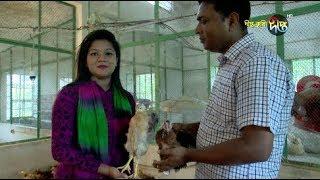 Deepto Krishi/দীপ্ত কৃষি -  ব্রয়লার থেকে পাওয়া যাবে দেশী মুরগীর স্বাদ ! বাকৃবি - পর্ব ৫৮৩