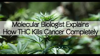 Dr. Christina Sanchez Explains How Cannabis Kills Cancer Cells