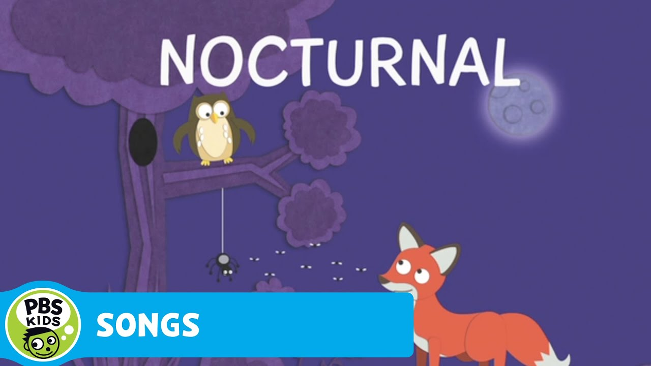 Cat In The Hat Nocturnal Animals