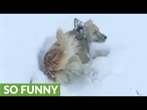 Winter-loving pup can't stop rolling in the snow