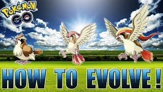 HOW TO EVOLVE YOUR POKEMON! PIDGEY EVOLUTION - POKEMON GO