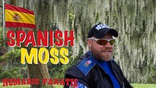 spanish-moss-camping-remote-lakeland