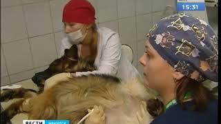 Собачье сердце  Животных в Иркутске теперь можно обследовать с помощью холтера