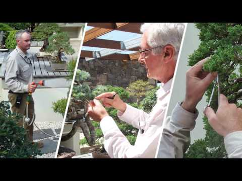 Explore the National Bonsai and Penjing Collection at the National Arboretum