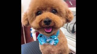 Cute Puppies In Tik-Tok