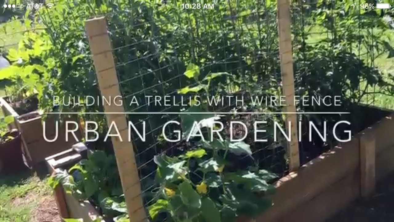 Beau Building A Trellis With Wire Fencing Urban Gardening