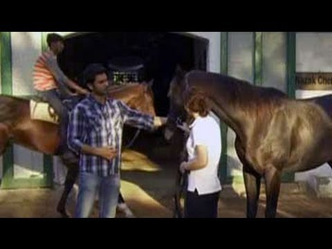 Heavy Petting: How Race Horses Are Trained