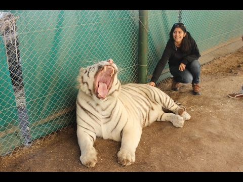 Zoo Lujan Argentina |  Humans with Most  dangerous predators/Animals in the world