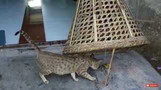 Simple best  Cat Trap // How To Catch A Cat