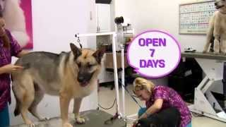 Fort Lauderdale Pet Grooming, Dog Boarding & Doggy Daycare