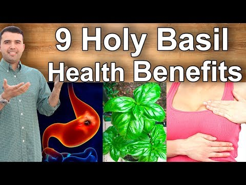 Holy Basil Health Benefits – What is Holy Basil Good For, Its Benefits and Properties