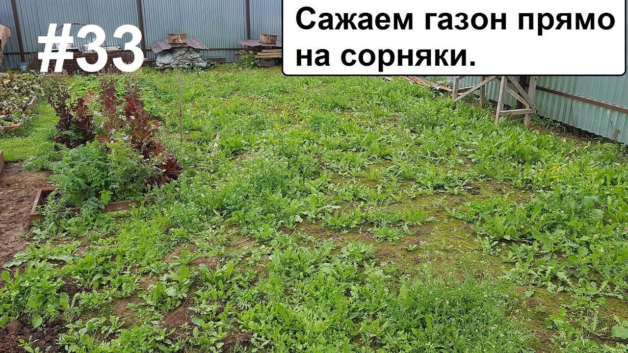 Сажаю газон прямо на сорняки. Что будет?