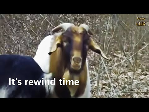 Pablo - Someone Lip Sync'd Will Smith With Goats