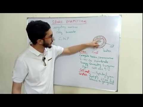 Spore Formation and Germination in Bacteria Urdu/Hindi