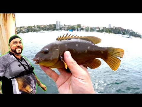 Fishing With LIVE Prawns! Sydney Harbour Fishing With Aka Mikes Fishing!