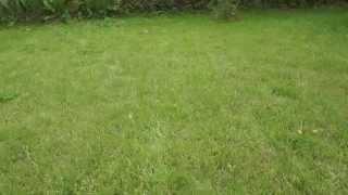 видео трава газонная универсальная