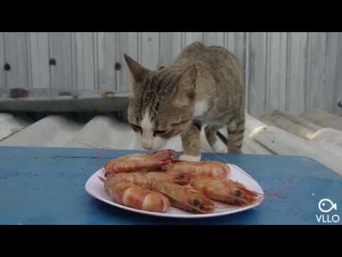 1️⃣ Buổi chiều của chuột con với món tôm sú luộc