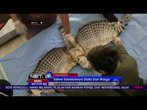 5 Elang & 2 Landak Siap Dilepasliarkan - NET24