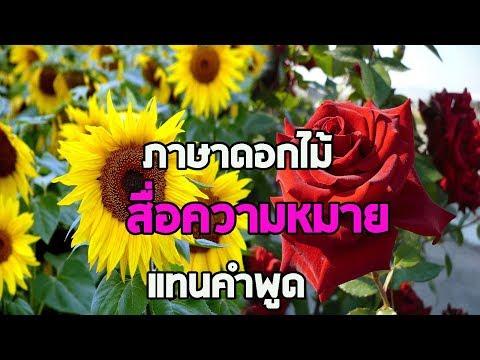 """""""10 ภาษาดอกไม้สื่อรัก"""" ความหมายของดอกไม้แต่ละประเภท คุณก็จะกลายเป็นคนโรแมนติกได้ง่ายๆ !!"""