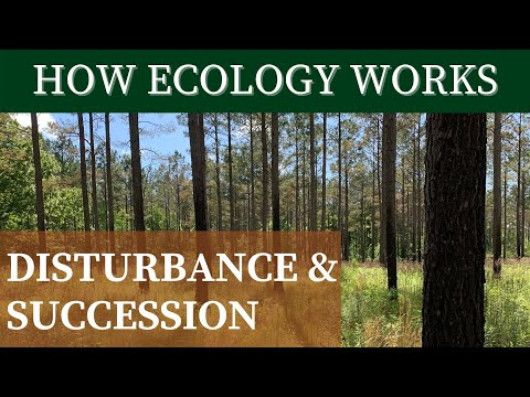 DISTURBANCE & SUCCESSION   How Ecology Works