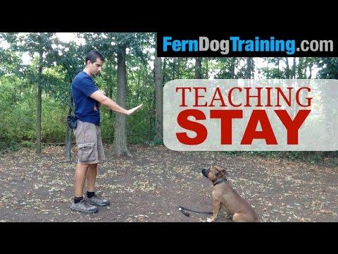 Puppy Training: 5 Basic Commands To Teach Your Dog | Figo