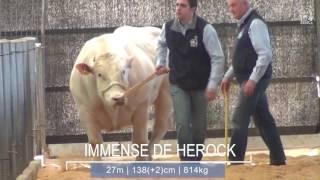 IMMENSE DE HEROCK thumbnail