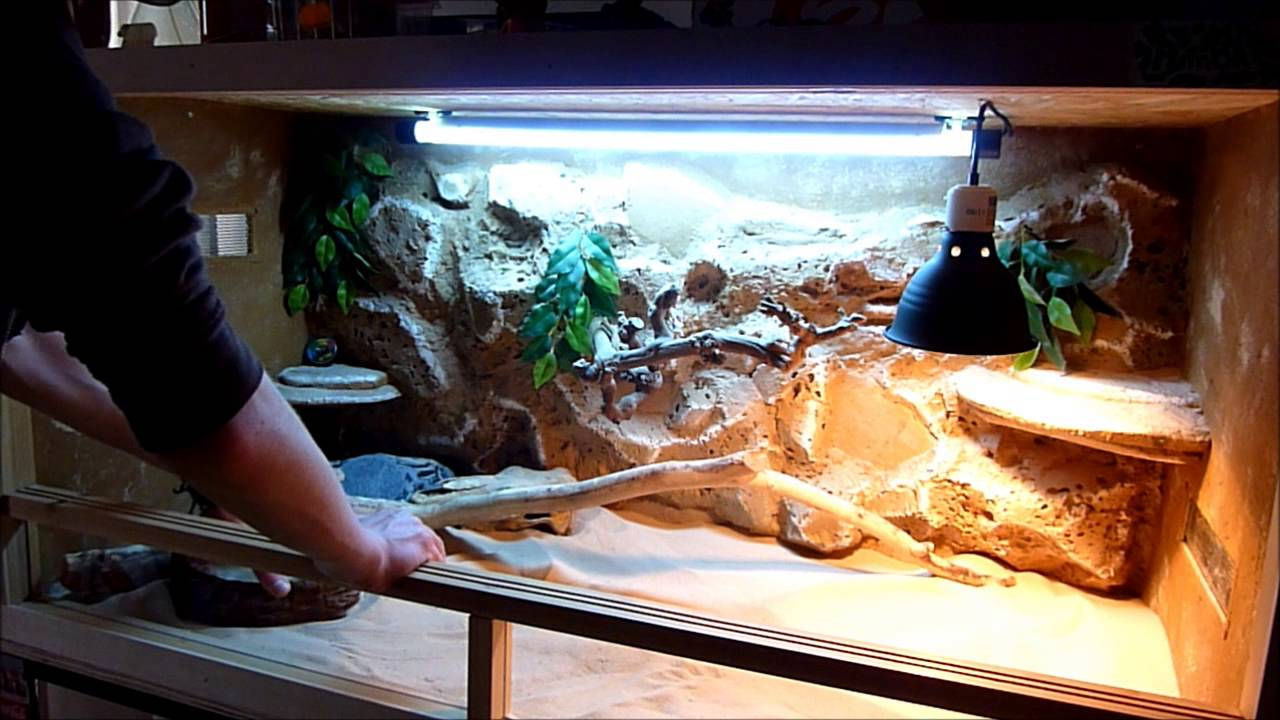 amenagement terrarium pogona vitticeps