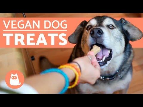 vegan-dog-biscuits-–-3-ingredients