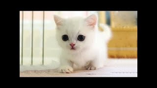 Cats and Cute Kittens overload Compilation 2018