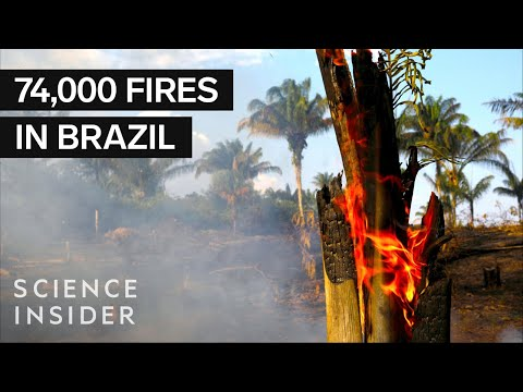 Why The Amazon Fires Are Such A Big Deal