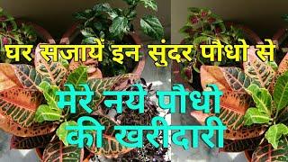 Plants suitable for Balcony,मेरे नये पौधो की खरीदारी,plants for balcony,anvesha,s creativity